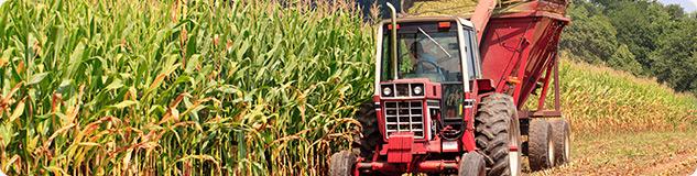 Corn Trading