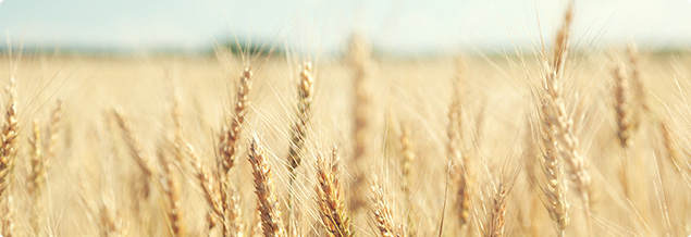 Wheat CFD Trading - Trade Soft Commodities at AvaTrade